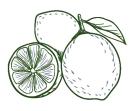 Citron_vert_gravure_miriam_desquesnes_gourmand_et_curieux