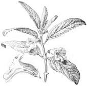 Plantes_Sesame_recette cake_citron_ausésame_patisserie_recettes
