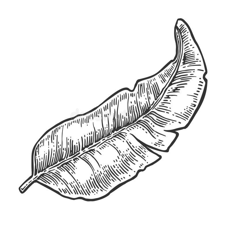 banane-de-feuille-illustration-recette-patisserie-entremet-gourmand-et-curieux