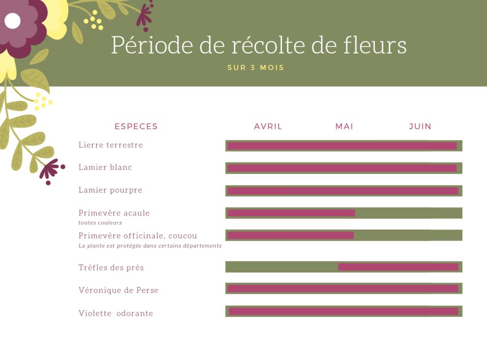 quelles_sont_les_fleurs_comestibles_récolte_saison