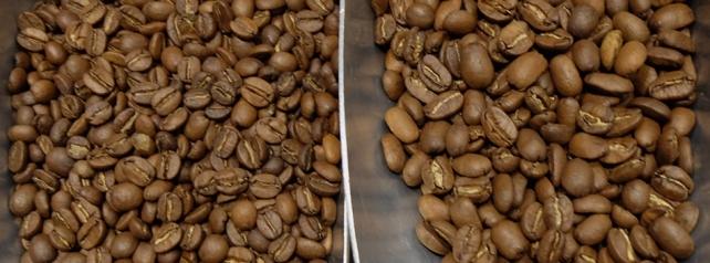 comment bien choisir le café conseil de chef café trié