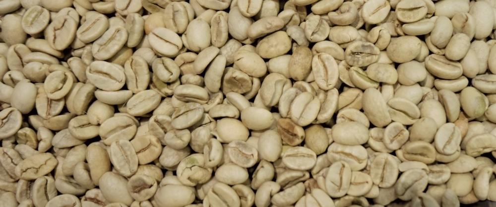 Photo de café vert telle qu'il arrive chez le torréfacteur