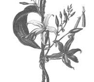 flan à la vanille et feve tonka recettes calissique formidale et gourmande blog patisserie 2020