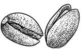 Pistache recette pistache macaron patisserie 2020